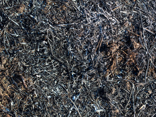Black burned grass on the ground as an abstract background