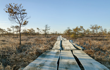 Wooden path in a bog.