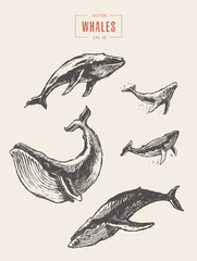 Set whales drawn vector illustration sketch