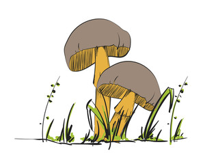 Forest mushrooms - hand drawn vector colorful sketch.