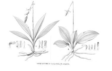 Illustration of plant