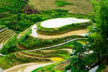 Rice paddy scenery in China