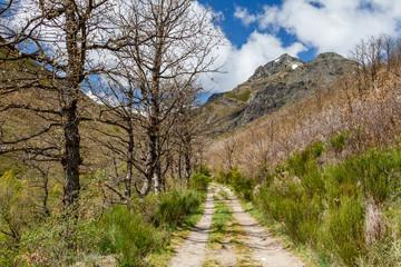 Robles, camino y Pico Gaya de Cueto. La Baña, Comarca de La Cabrera, León, España.
