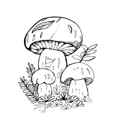 Back and white illustration of mushrooms, grass and flowers.