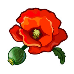 Poppy flower. Beautiful red plant, grass, wildlife. Image in cartoon style. Vector illustration isolated on white background