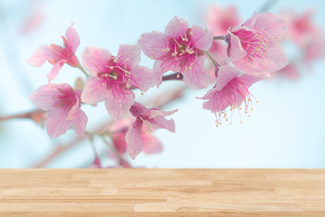 Top of wood table empty ready for your product and food display or montage background of pink cherry blossom flower.