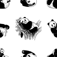 Seamless pattern of hand drawn sketch style giant pandas isolated on white  background. Vector illustration 0ab541a32ad