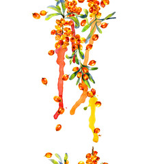 Orange, ripe, tasty, healthy, juicy sea buckthorn. Sour, sweet, fragrant, appetizing berry. Watercolor. Illustration