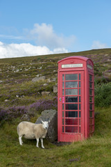 United Kingdom, Scotland, Highland, telephone booth and sheep