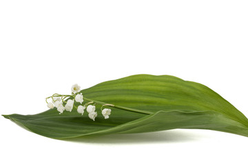 Fotorolgordijn Lelietje van dalen White flower of lily of the valley, lat. Convallaria majalis, isolated on white