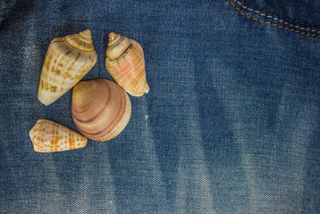 seashells frame on jeans background texture with empty space for copy or text