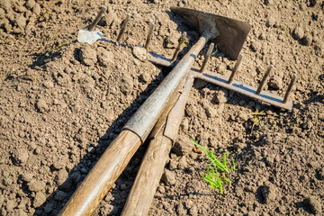Mattock and rake on soil