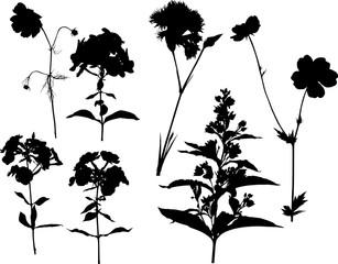 set of seven garden flower silhouettes on white