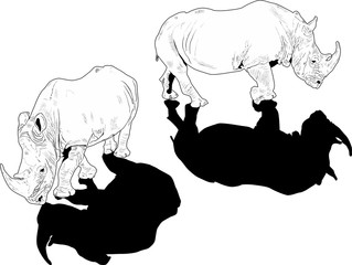 two white rhinoceroses with black shadows