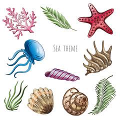 Set of seashells, starfish and jellyfish on white background for design.