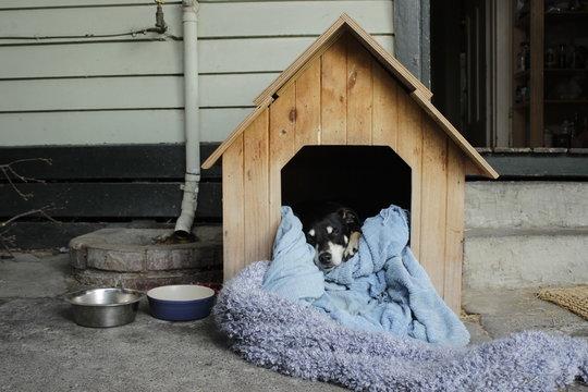 chien dans sa cabane