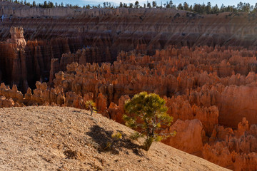 Hoodoos Lit by the Setting Sun in Bryce Canyon National Park, Utah, USA