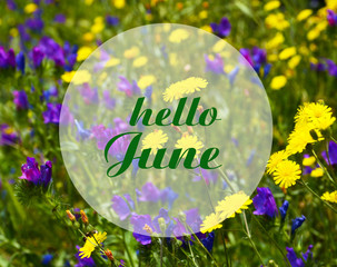 Hello June.Welcoming card with text on a summer meadow natural floral background. Summertime concept.Selective focus.