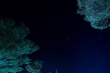 Trees with a blue sky and stars behind