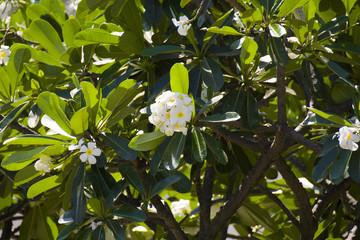 small magnolia flowers on the tree