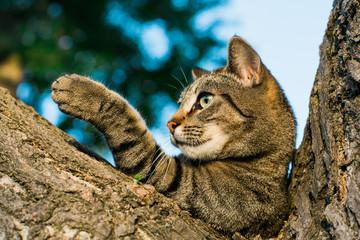 Stripped cat lying on tree