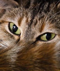 Kitten stare