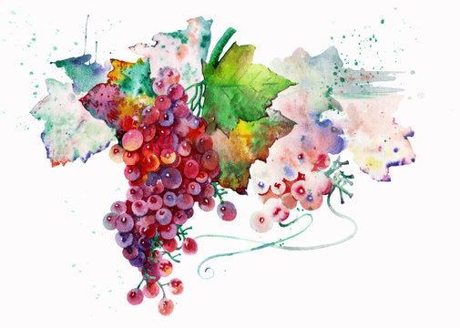 Bunch of grapes on white background, watercolor illustration. Plant element for design and creativity. Handmade watercolors. Multi-colored grapes.