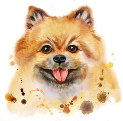 Watercolor portrait of dog pomeranian spitz