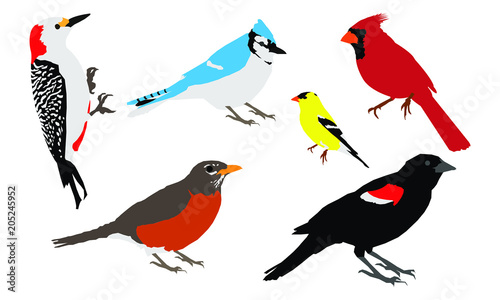 """Common Backyard Birds common backyard birds vector"""" stock image and royalty-free vector"""