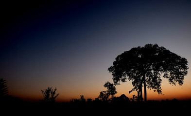silhouette of a tree on sunset background, View of trees near sunset