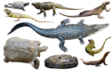 collection of reptiles Wall mural