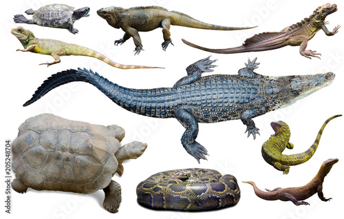 Wall mural collection of reptiles