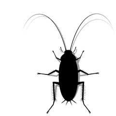 silhouette cockroach on transparent background
