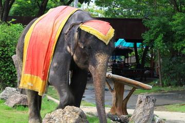 Elephant show At Samutprakarn Zoo, Thailand May 16, 2018