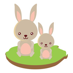 cute rabbits on the grass over white background, colorful design. vector illustration