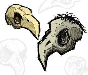 Bird skull illustration hand drawing
