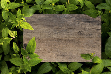 Mockup wood plank blank on a green leaves. Creative layout with nature concept.