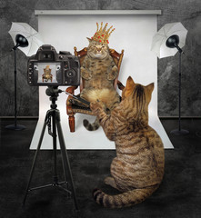 The cat photographer makes a photo of the king in his photo studio.