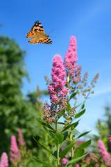 Schmetterling 487