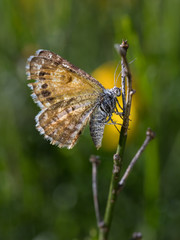 Butterfly or moth in its natural environment