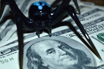 Black spider sits on one hundred dollar bills