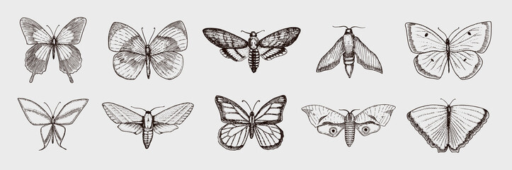 Collection of butterfly or wild moths insects. Mystical symbol or entomological of freedom. Engraved hand drawn vintage sketch for wedding card or logo. Vector illustration. Arthropod animals.