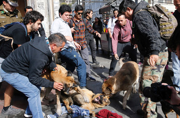 People try to separate a fight of stray dogs during a rally demanding an end to sexism and gender violence in education in Valparaiso
