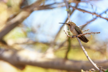 Hummingbird Perched on Branch of Tree