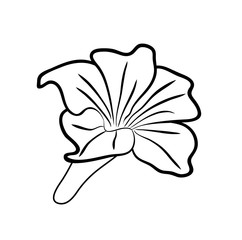 Vector illustration, isolated flower in black and white colors, outline hand painted drawing
