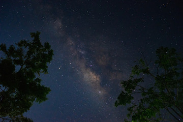 The milky way galaxy with trees foreground in the night sky.