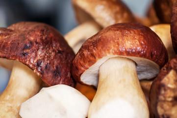 White mushrooms, close-up background