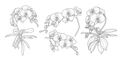 Set of isolated orchid branch in 4 styles set 1.