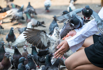 Pigeons eat food from a hand in the park.