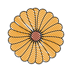beautiful sunflower decorative icon vector illustration design